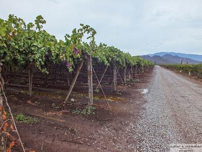 Enocuriosos… Viñas de Chile – San Esteban