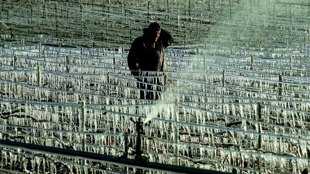 Notícias da enosfera… Vinicultores franceses enfrentam a pior geada em 25 anos
